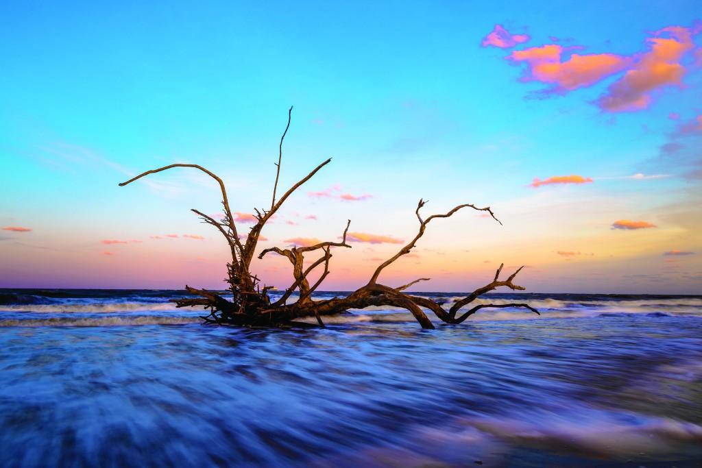 Driftwood Beach Jekyll Island Ccsz