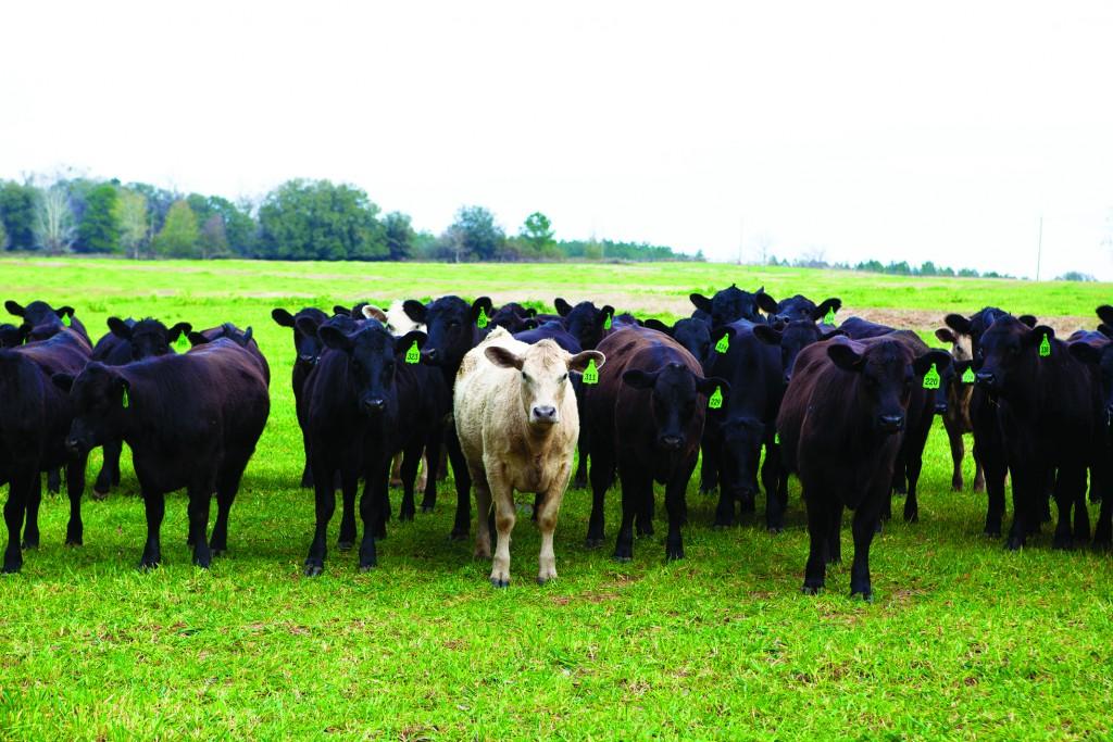 Boyd Farms 3313 Ccsz