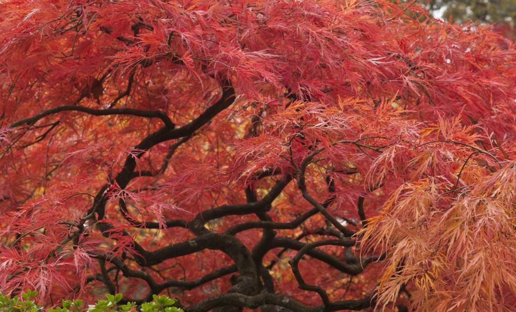 Fall,in,a,japanese,garden